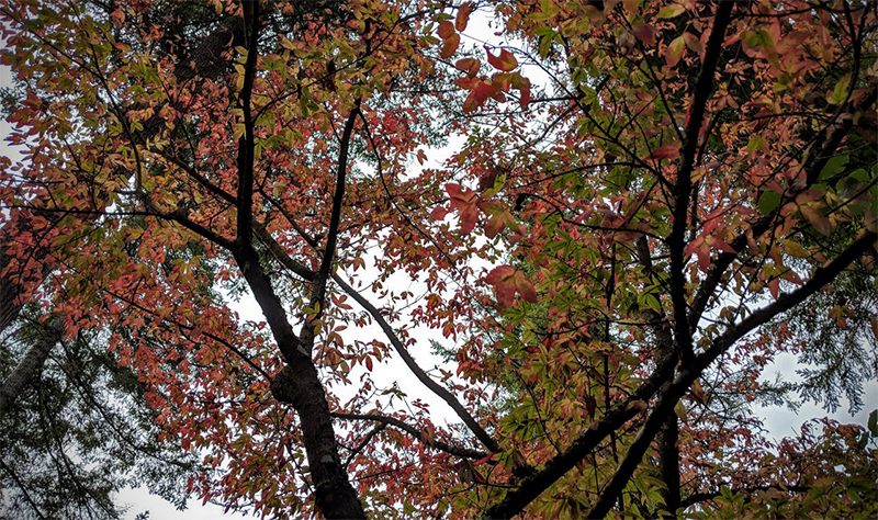 Deciduous trees and shrubs class